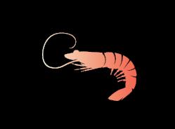 gambero_icon